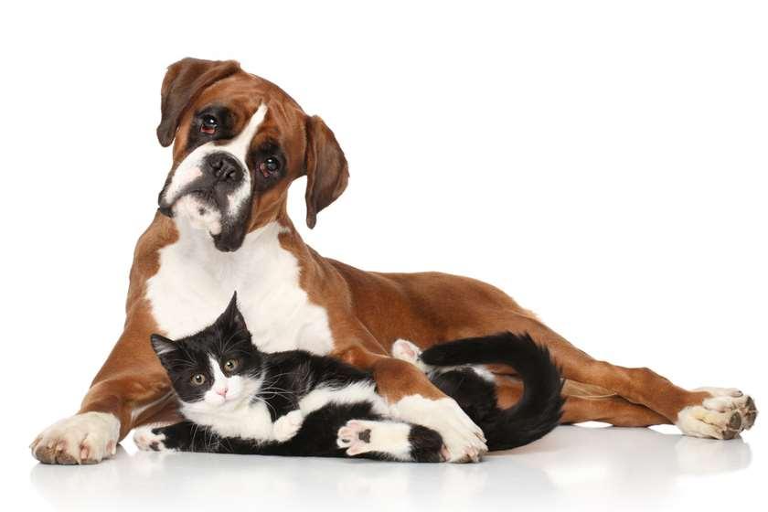 ძაღლი კატა